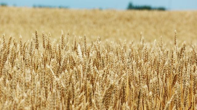 アメリカでお好み焼きを作る 小麦粉に注意