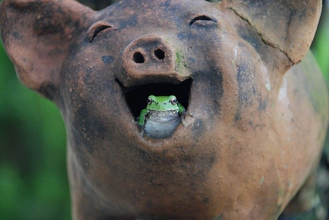 pig and frog